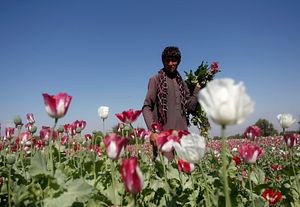 The Narco-State of Afghanistan