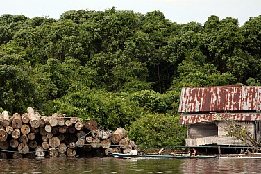 Is Indonesian Forestry Reform in Peril Under Jokowi?