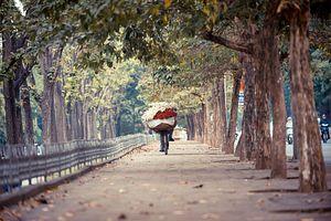 Hanoi Citizens Protest Tree-Felling Plan