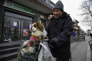 Saving China's Dogs