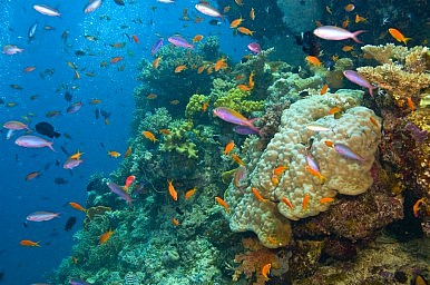 The Plan to Save the Great Barrier Reef