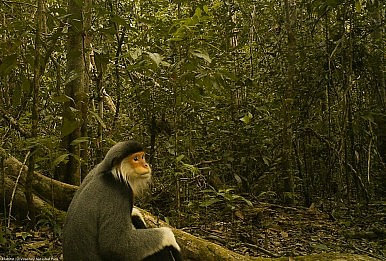 Hunt for Rare Indochina Wildlife Yields Results