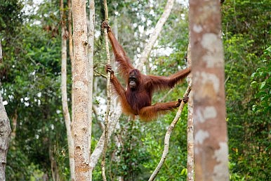 Saving Indonesia's Forests