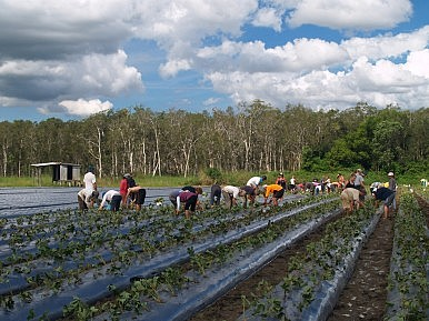 Labor Exploitation Revealed in Australia's Food Industry