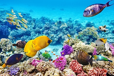 UNESCO's Great Barrier Reef Decision Has Much Wider Ramifications
