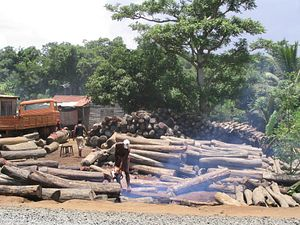China: The Cause of (and Solution to?) Illegal Logging