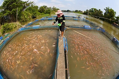 Governments Need to Spend More on Fish Farming