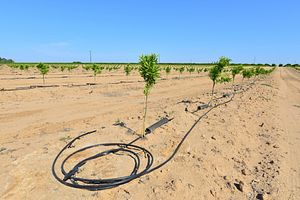 Asia's Food Supply Weathers California's Drought