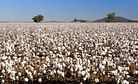 What's the Verdict on Forced Labor in Uzbekistan's Cotton Harvest?