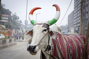 Murdered Over Beef? Muslims Are Under Siege in India