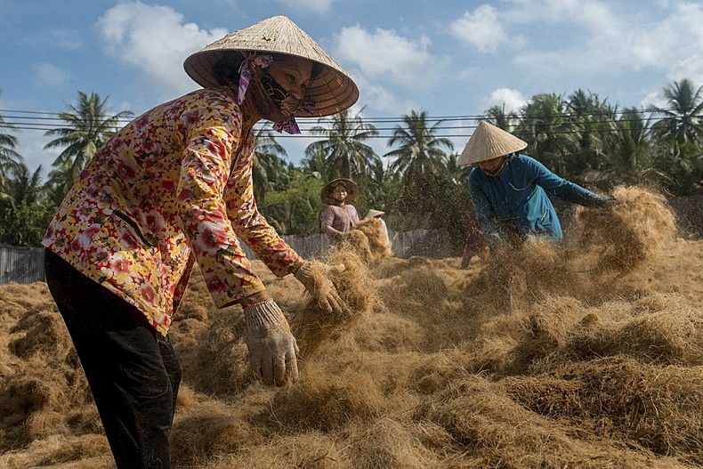 Workers separate coconut husk fibres andleave the to dry in the sun. The ground husks will be used for a variety of purposes such as a low cost plant mulch and soundproofing material. Coconut Island, Ben Tre, Vietnam photo by Luc Forsyth.