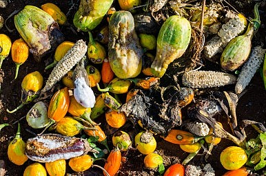 Reducing Food Wastage: Not Just Food for Thought