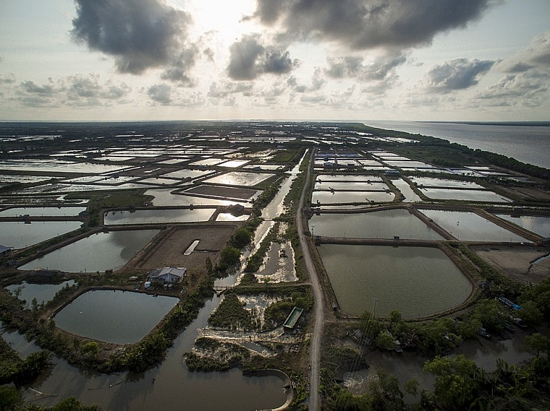 Aerial views of the shrimp farms on the island of Phu Thanh in Southern, Vietnam.  Photo: Luc Forsyth and Gareth Bright, via drone.