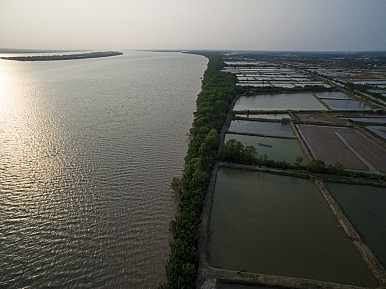 In the Mekong Delta: Erosion, Pollution, and Millions of Shrimp