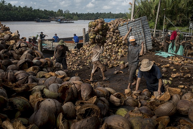 Factory workers load wire baskets with coconut husks and carry them to nearby grinding machines. Photo by Luc Forsyth.