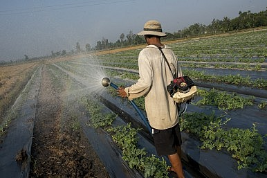 The Toxicity of Agriculture