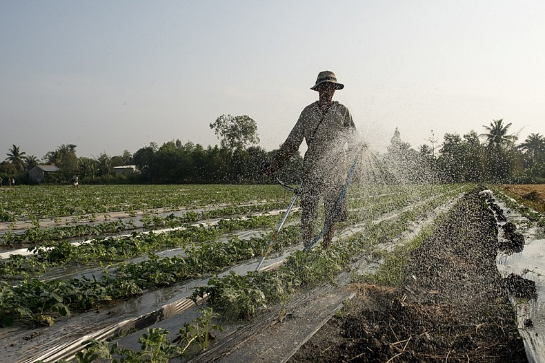 A farmer applies agrochemicals to a patch of watermelons on the outskirts of Can Tho. Photo by Luc Forsyth.
