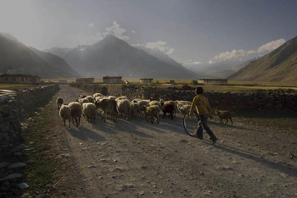 The Rupshu Pastoralists