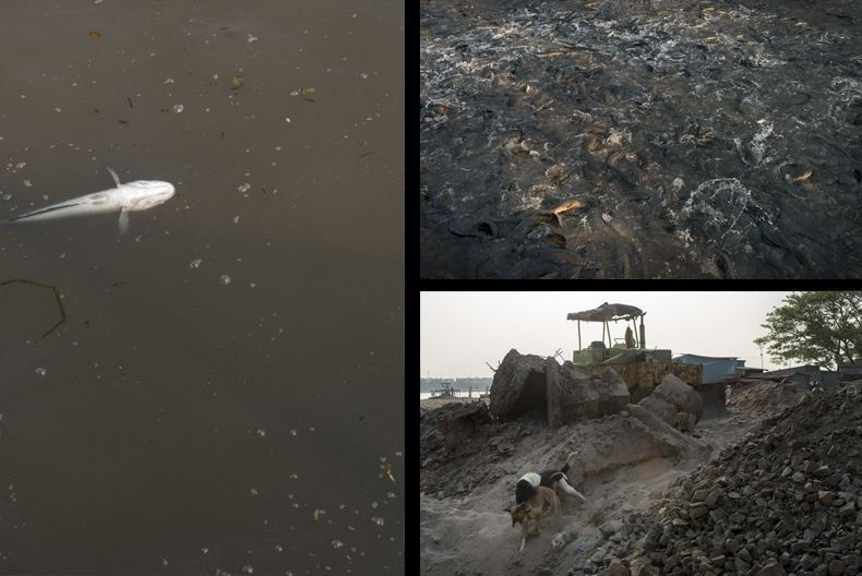 A dead fish floats in a pond while in another a large number roil wildly; nearby new ponds were being constructed. Photos by Luc Forsyth.