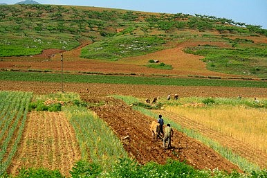The Limits of Agricultural Reform in North Korea