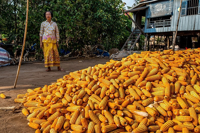 Cambodian corn piled high. Photo by Luc Forsyth.