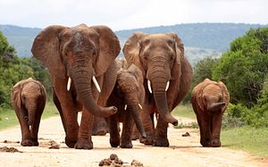 China's Uphill Battle Against the Ivory Trade