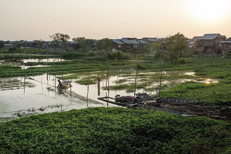A farmer tends to his aquatic crops on Phnom Penh's Boeung Tumpun Lake. Photo by Luc Forsyth.