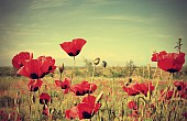 Poppy Production: The Taliban's Cash Cow