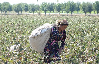 Uzbekistan: White Gold, Dirty Business