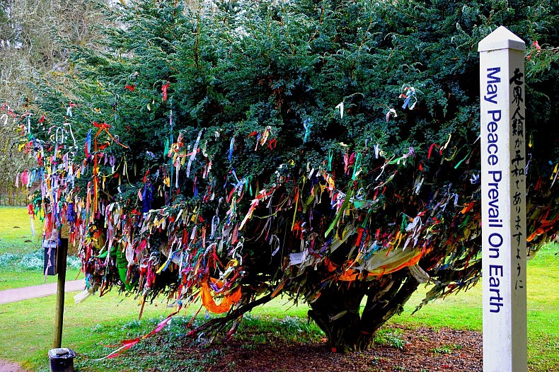 "A ""clootie tree,"" originating from ancient Celtic traditions in which multicolored strips of cloth were dipped into spring wells and wrapped around trees as part of a healing ritual. Photo by Bradley Jardine."