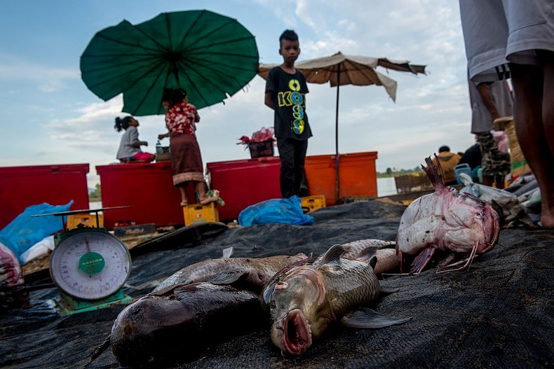 Fresh fish are brought to the Nakasang market every morning. Nakasang is directly upriver from the Khone Phapheng waterfalls, and the majority of commercial fish caught in the area ends up in the Nakasang market. Photo by Luc Forsyth.