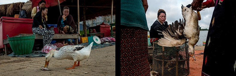 A single duck is permitted to scavenge among the stalls of the Nakasang market. Locals say the duck comes to the market everyday and it has become a mascot of sorts. Meanwhile, other ducks are less fortunate. Photos by Luc Forsyth.