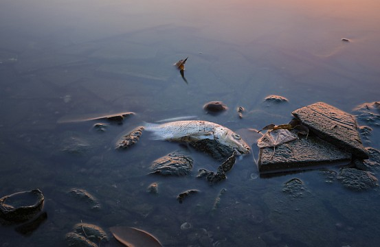 vietnam fish deaths cast suspicion on formosa steel plant