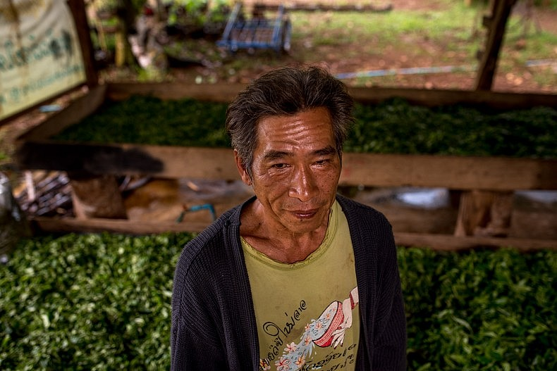 An independent organic tea and coffee grower stands in front of drying tea leaves on the Bolaven plateau outside Pakse. Photo by Luc Forsyth.