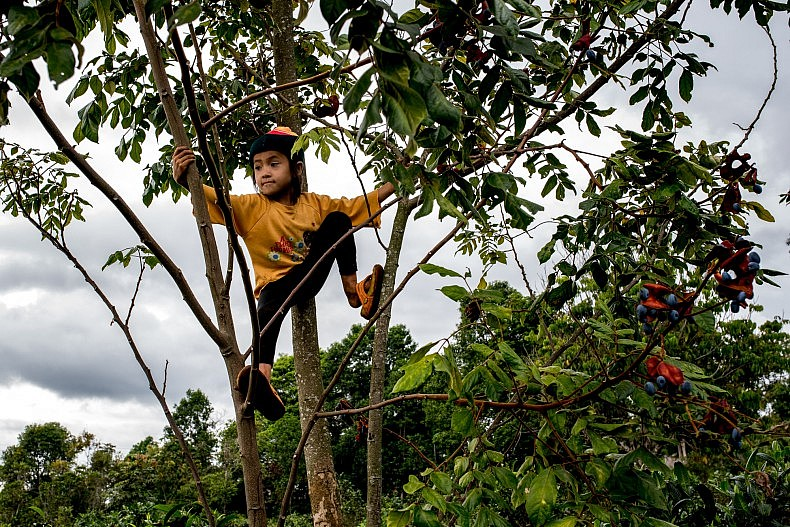 A young girl sits in a coffee tree on the Bolaven plateau. Photo by Luc Forsyth.