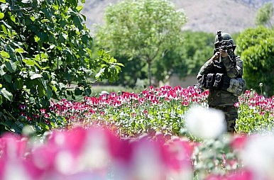 Legalizing Opium Won't Work for Afghanistan