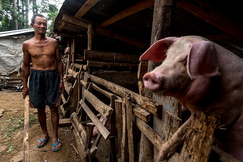 A pig farmer tends to his livestock in the village of Don Mo.  While just a few hundred meters away from the Samaky Sai (United Village) relocation camp, Don Mo has abundant farmland and the quality of life is vastly superior to that in the camp. Photo by Luc Forsyth.