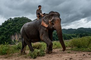 Laos: The Land of a Million Elephants