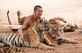 The Tragic Tale of Thailand's Tiger Temple