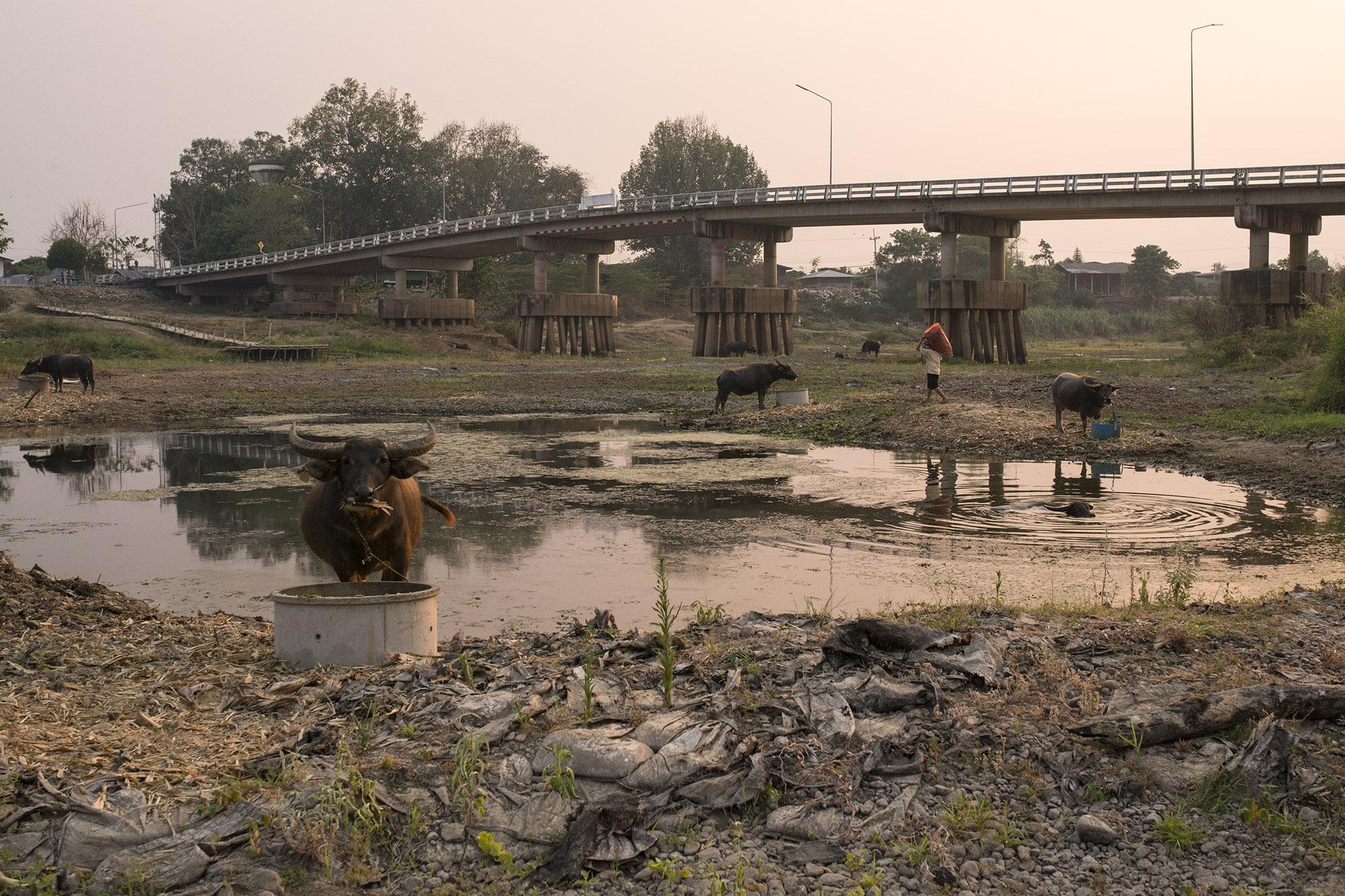 Thailand's Drought Struggle