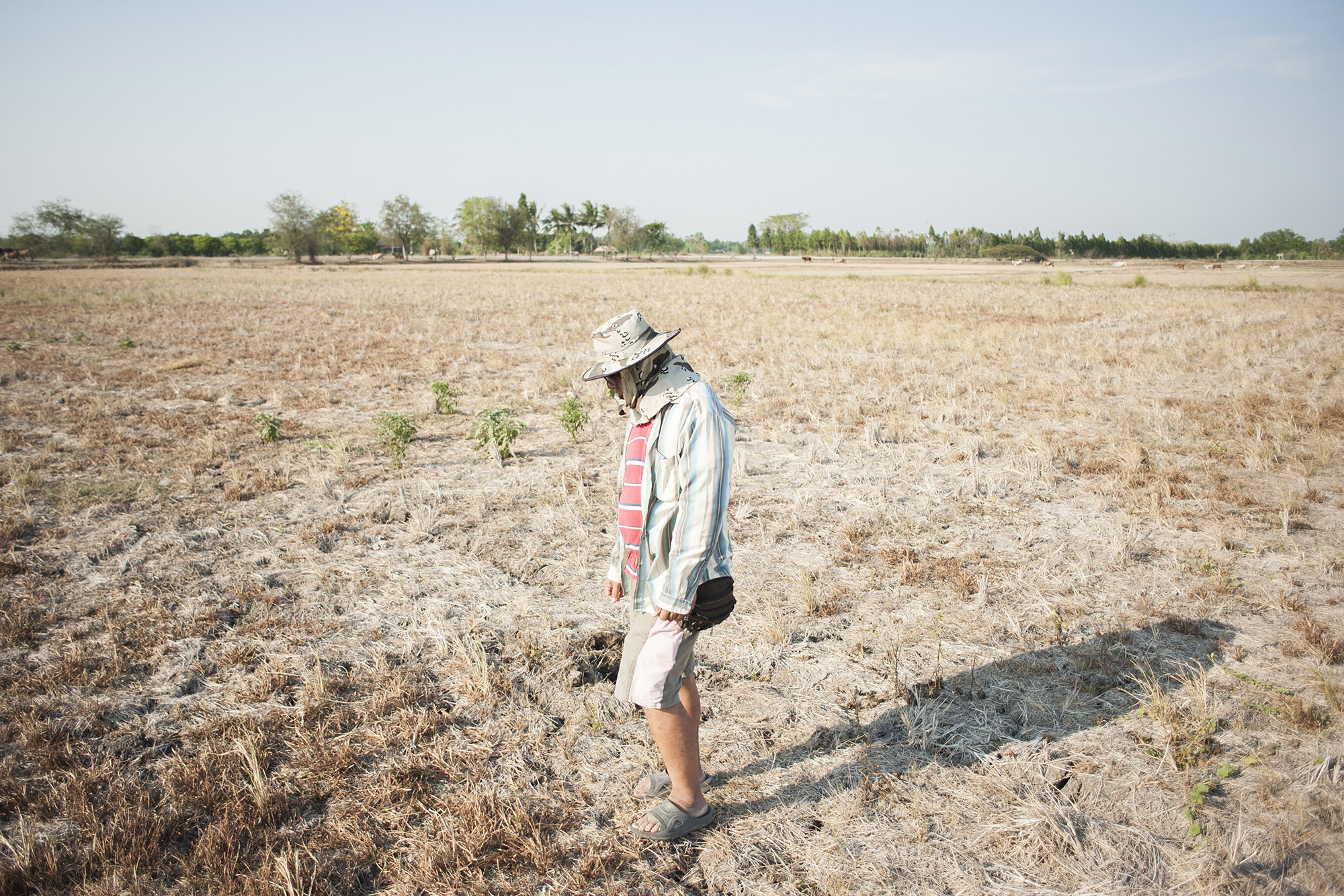 """effects on drought essay California drought creates grim ripple effect of """"we have a different type of drought than most people in the rest of the country think of because we're."""