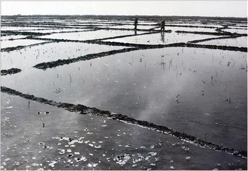 The swampland around Tashkent was first dried and then turned into rice fields. Courtesy of Victoria Kim.