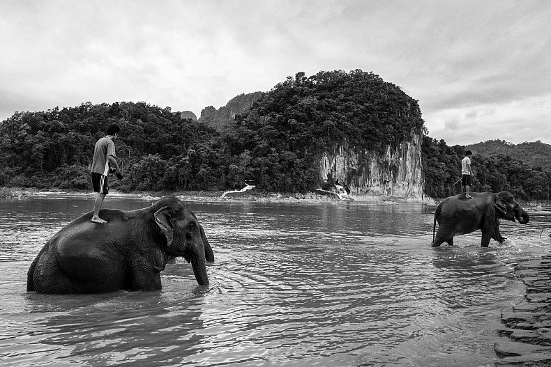 Mahout, or elephant riders direct their elephants through the river. Photo by Gareth Bright.