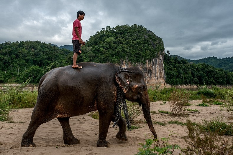 Son Phet, 24, has been working as a Mahout for nearly 2 years. His current elephant, Khoun, is 47 years old. Photo by Luc Forsyth.