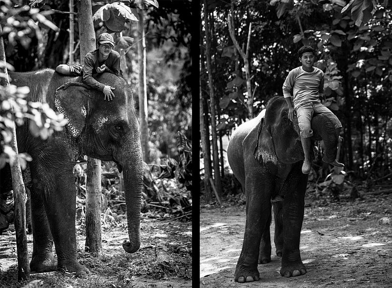 Mahouts say their bond with their elephants is base on trust, little else could get the 3 tonne mammal to move save trust or violence. Photo by Gareth Bright.