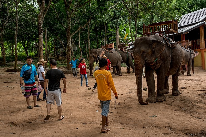 Chinese tourists gather around elephants to take photos outside Luang Prabang. Photo by Luc Forsyth.