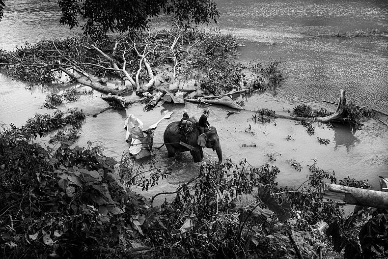 An elephant hauls teak logs from the Nam Ou river to shore so they can be transported to lumber mills. Photo by Gareth Bright.