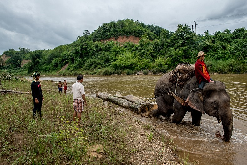A logging elephant hauls a teak log across the Nam Ou river. Photo by Luc Forsyth,