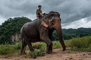 Laos: The Land of a Million Elephants