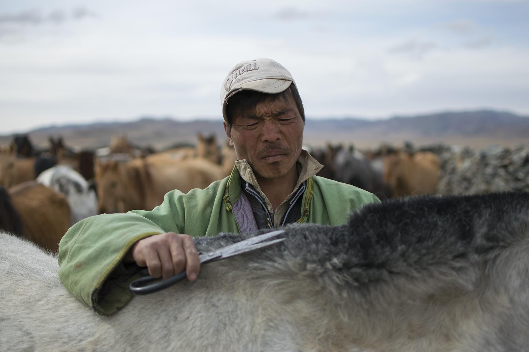 A Haircut for Mongolia's 'Half-Wild' Horses